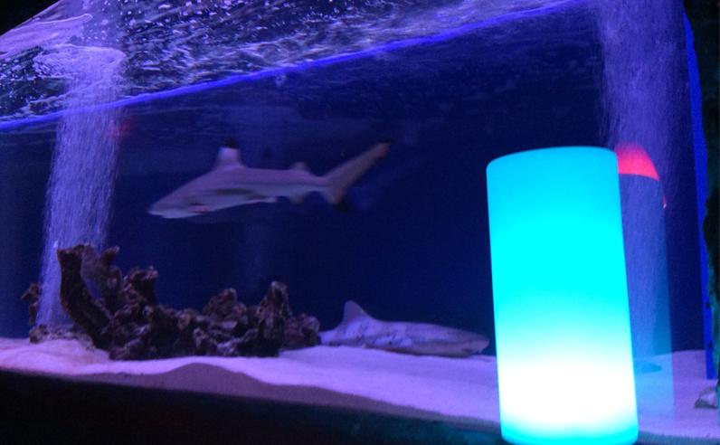 光るLED内蔵家具クラシオン「水族館」で使用